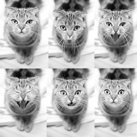 Процесс зевания моей кошки