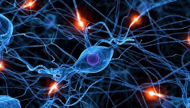 А Вы знали? Изучение иностранного может изменить структуру головного мозга
