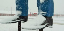 Зимнее Cowtown Rodeo