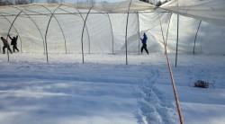 Alstede Farms создала наивпечатлительный эшкн у себя там в полях...
