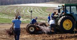 Alstede Farms - 700 кусточков за один день сладкой вишни посадить. Слабо?