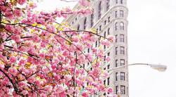 Фото дня – весна в NY