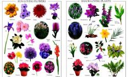 Деревья и цветы на английском языке