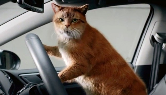 Volkswagen: коты продвигают лизинг