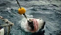 Учительница из Нью-Джерси близко «познакомилась» с акулой