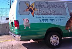 Hollywood Paws -- это агентство, которое  для собак с незаурядным способностями.