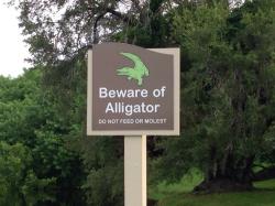 Только аллигаторы спасут страну от мудаков!