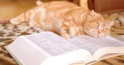Разница между тем, чему учат в учебнике и как ето есть в жизни