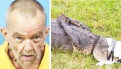 Суровые парни Флориды уже насилую крокодилов