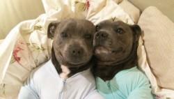 Блог убыбающихся собак