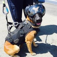 USCG dog