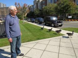 Бывают ли нападения гусей на людей на улицах города?