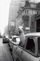 Лама, Таймс–Сквер, 1957
