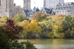 Как провести выходные в Нью-Йорке (6–8 ноября)
