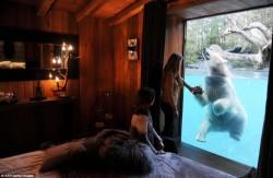 Хорошая идея для мини гостинницы ( ночь с обезьяной... ночь с лисами... ночь с крокодилом...)