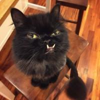 Познакомиться с кошечкой по имени Принцесса Монстров