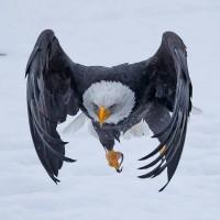 Cимвол, летящий на крыльях ночи