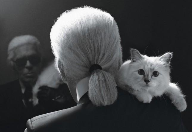 """Шок: кошка-миллионер """"вкалывает"""" на известного дизайнера"""