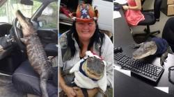 Байкерша из США  и ее ручной аллигатор