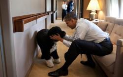 Собаки как символ штатов США