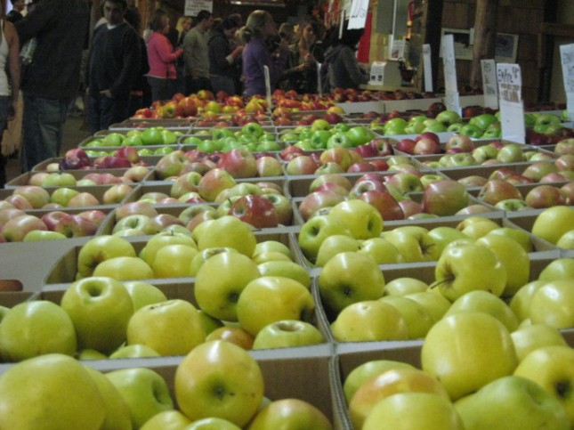 Как разобраться в американских сортах яблок