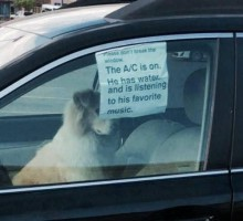 Вы можете разбить окно в машине