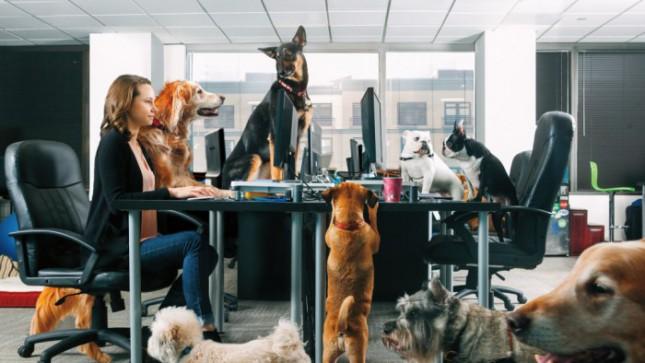 В США разрешили в офис приводить своих собак