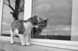 Кот иллюзион
