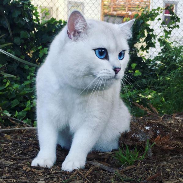 Кот с самыми красивыми глазами