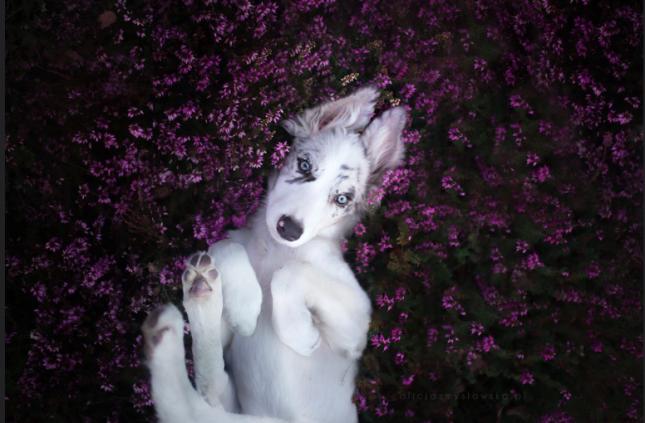 Национальный день собаки