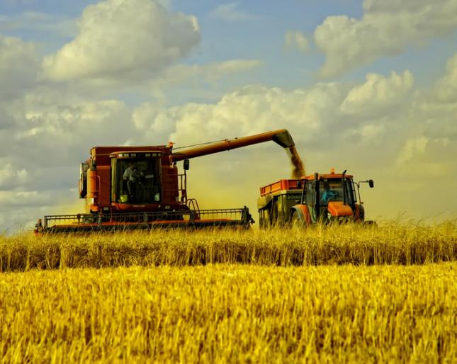 Важно: совершенно необходимо избегать традиционной пшеницы в Соединенных Штата