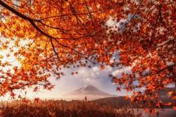 Гора Фудзи и осенние листья («Mt.Fuji and autumn leaves»)
