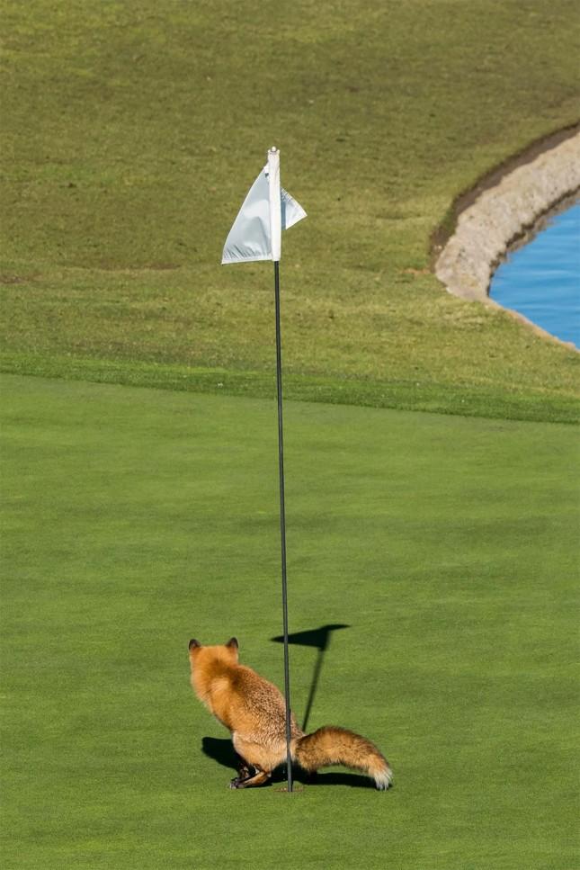 Как вы относитесь к гольфу?