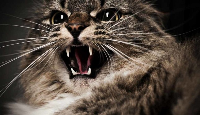 #Котозрада: в Австралии построили самый длинный в мире забор против кошек