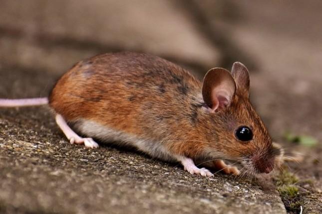 Мыши пробрались в банкомат и съели больше миллиона