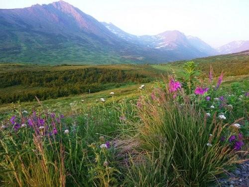 На Аляске тоже бывает лето