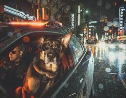Полиция Ванкувера выпустила календарь 2019 со служебными собаками