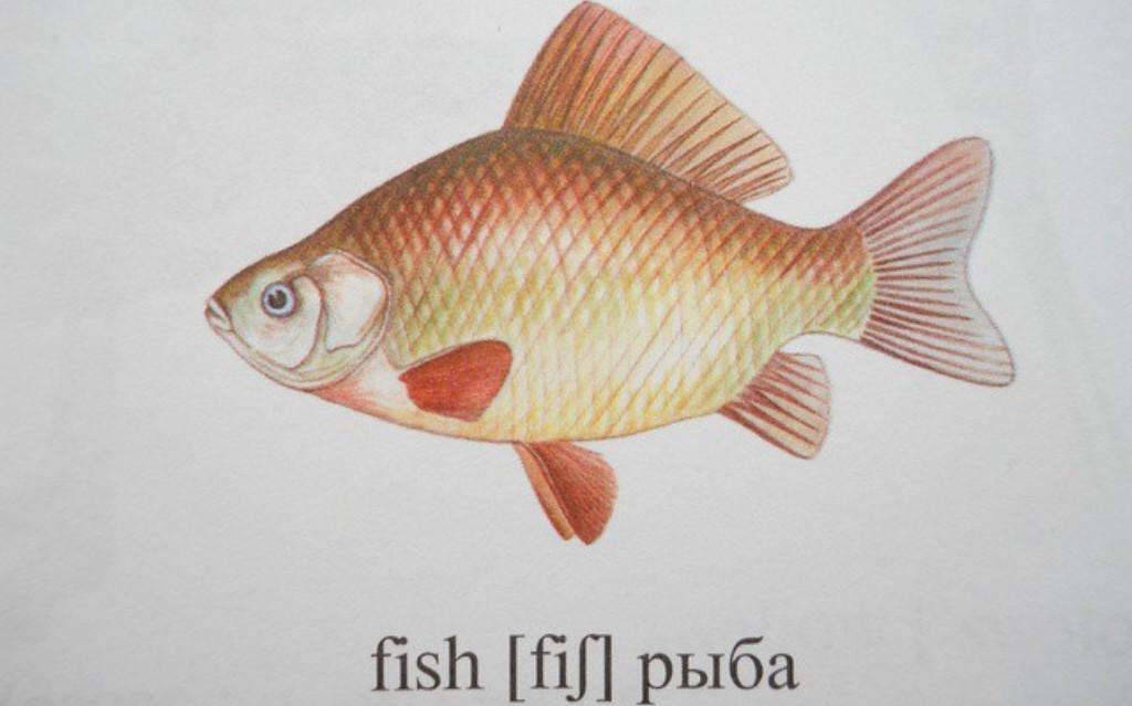 как написать по-английски ловить рыбу